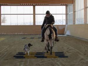 Hund und Pferd 1