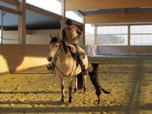 Hund und Pferd 2