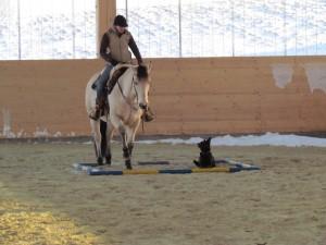 Hund und Pferd 3