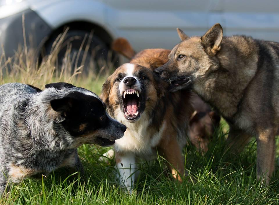 ausdrucksverhalten beim hund